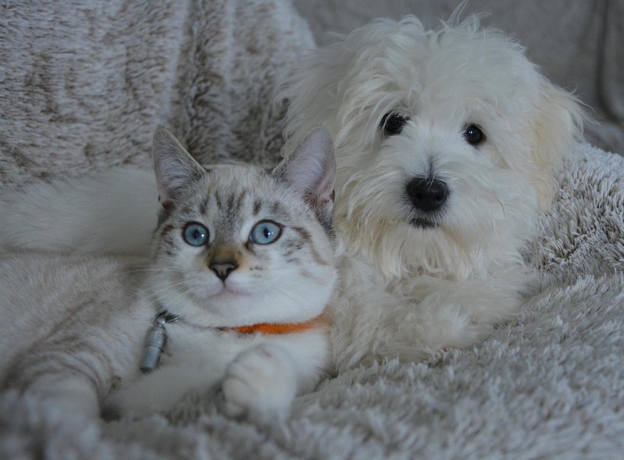中高齢期はペットの癌に注意