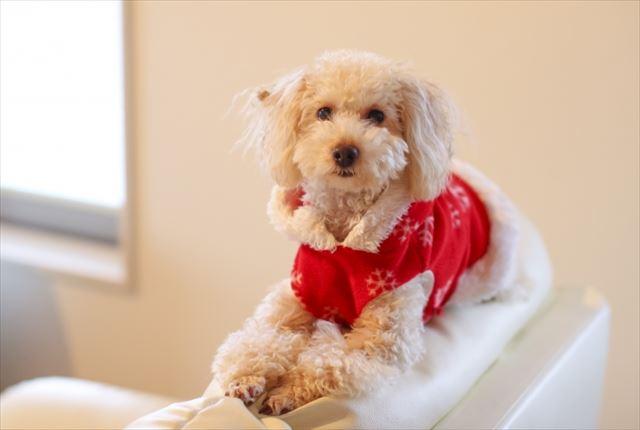 犬用サプリメントの選び方