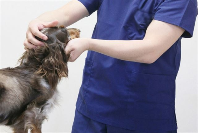 愛犬の健康状態に合ったサプリを選ぶ