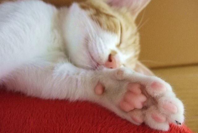 猫に発生しやすい変形性関節症の箇所