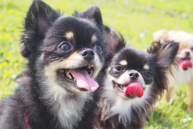 犬の舌の役割