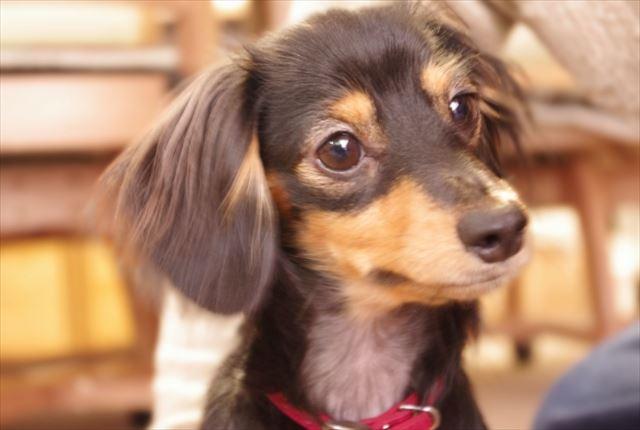 愛犬の皮膚トラブルも免疫力アップで解決!